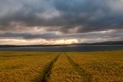Wheat Sunset {Explored}