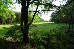 20170604 31 Haulerwijk (Sjaak Kempe) Tags: 2017 zomer summer nederland niederlande netherlands sjaak kempe sony dschx60v friesland haulerwijk