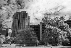 """""""Forever Bicycles"""" (infrared) (wanderingYew2 (thanks for 3M+ views!)) Tags: foreverbicycles 120 6x9 aiweiwei austin austintx austintexas fuji6x9 fujigw690 r72filter downtown film filmscan infrared infraredfilm mediumformat sculpture"""