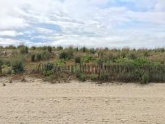 Dunes, Atlantic City_jpg (ted cavanagh) Tags: dunes dunegrass sanddunes beaches fences atlanticcity