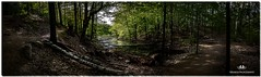 MAY 2017 NM1_4118_348-Pano-222. (Nick and Karen Munroe) Tags: panorama pano pandora photoshop multipleimages forest trees woods river stream back woodsbramptonbeautybeautifulbrillianthikeheart lake conservation areaheart lakeheart conservationontariooutdoorscanadanikonnick munroenick karen munroenaturenick karennikon 1424 f28nikon d750karenick23karenickkaren nick munroekaren hike spring 2017 may landscape landscapes scenic scenery