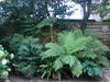 Wollemia Nobilis. 17.08.2012 (NashiraExoticGarden) Tags: wollemianobilis exoticgarden exotentuin 17082012