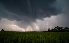 Donnerwetter (Eifeltopia) Tags: moody storm lightning range strike cloudy rainy em5 polarisationfilter light meadow field nature landscape stormy dramatic sky rhinelandpalatinate rheinlandpfalz gewitter wild outdoors südeifel eifel faradayscherkäfig adventure gosh