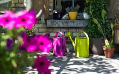 FlowerPower (anita.niza) Tags: burkartshaus thurgau pink flowers summer été sommer garten jardin garden