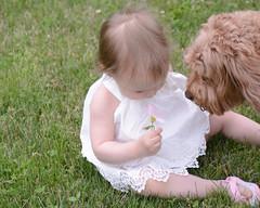 Curiousity (hmthelords) Tags: flower dog summer 2017 granddaughter rosie 15m outdoors activeassignmentweekly recreationalpursuits bestofweek1 bestofweek2 bestofweek3