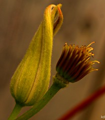 bounty (Kens images) Tags: garden beauty growth outdoors canon 40 d colour macro texture