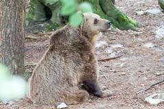 IMG_0559.jpg (wfvanvalkenburg) Tags: ouwehandsdierenpark beer familie