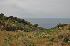 The Orchard and the Sea (Fritz_-77) Tags: spain andalusia mediterranian