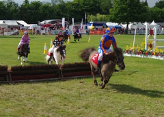 The Shetland Pony Grand National at the Kent County Show....archiving (favmark1) Tags: 2017 kentcountyshow detling saturday