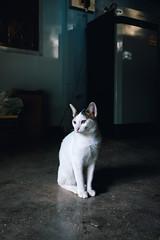 Mother's nameless kitty (norsez {Thx for 13 million views!}) Tags: 40mm apsc cmos fujifilm raw xpro1 xtrans classic fastlens fuji fujixpro1 fujifilmxpro1 lens manualfocus nokton voightlander xp1 cat