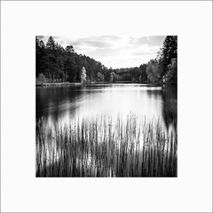Etang de Hasselfurth #4 (Guillaume et Anne) Tags: étang hasselfurth france canon 6d 35mmf2is 35mmf2 35 35mm ef35 f2 noiretblanc bw filtre nd110 nd1000 poselongue longexposure