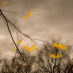 Fleeting (William Flowers) Tags: flying falling ephemeral time change floating