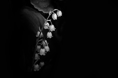 Lilies of the Valley (Lialla) Tags: lilies lilyofthevalley flowers blackandwhite mayflowers contrast