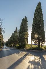 Il Viale dei cipressi di Bolgheri (catherina unger) Tags: maremma toscana bolgheri cypress cypresses tree trees road scenic sunset castagneto carducci tuscany italy