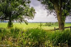 Groene hart 42 (M van Oosterhout) Tags: groene hart zuid holland alphen aan den rijn dutch netherlands nederland landschap landscape beautiful tourism toerisme