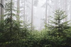 And it reminds me... (explore) (desomnis) Tags: forest wood woodland trees fog mist misty mystic foggy foggymood foggyatmosphere nature naturephotography landscape landscapephotography landschaft landscapes desomnis böhmerwald bohemianforest bokeh depthoffield 35mm sigma35mmf14dghsmart sigma35mm 6d canon6d canoneos6d desmonis haze mühlviertel austria österreich oberösterreich upperaustria