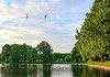 Catch'n'fly playing (Aram Bagdasaryan) Tags: landscape water sky birds trees fly spiritofphotography