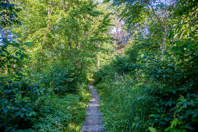 Beechwood Nature Preserve - June 21, 2017