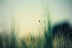 (Pea Jay How) Tags: blur countryside country natural nature climb insect grass