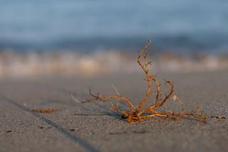 Am Meer mit dem Mitakon 35mm/0.95