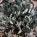 Cacti. Phoenix, AZ