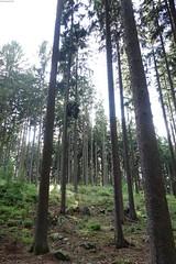 im Wald ... (karsten13) Tags: naturfreundehaus 28062017