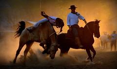 Quadro da Fronteira (Eduardo Amorim) Tags: gaúcho gaúchos gaucho gauchos cavalos caballos horses chevaux cavalli pferde caballo horse cheval cavallo pferd crioulo criollo crioulos criollos cavalocrioulo cavaloscrioulos caballocriollo caballoscriollos pampa campanha fronteira uruguaiana riograndedosul brésil brasil sudamérica südamerika suramérica américadosul southamerica amériquedusud americameridionale américadelsur americadelsud cavalo 馬 حصان 马 лошадь ঘোড়া 말 סוס ม้า häst hest hevonen άλογο brazil eduardoamorim jineteada gineteada