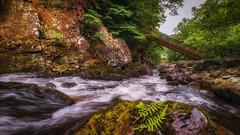 No bridge too far..... (Einir Wyn Leigh) Tags: landscape wales cymru love happy water river green foliage rain july trees rugged outdoors wild rocks pool