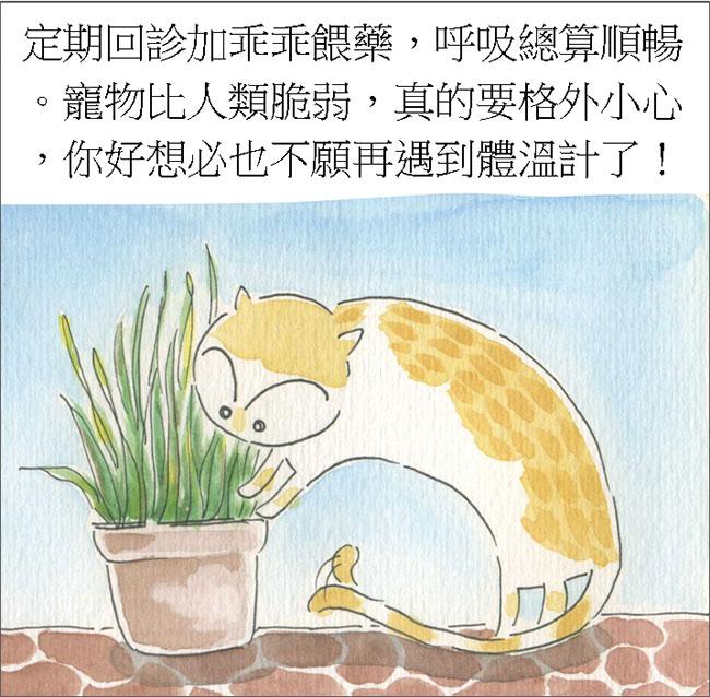 家裡來了一隻貓 原來貓會憋氣
