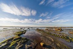 P1000406.jpg (meerecinaus) Tags: longreef beach