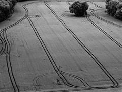 Crop circles.....   (from the farmer) (rainerralph) Tags: schwarzweiss blackwhite kornkreise spuren deutrschland omdem1markii luftaufnahme bw feld fieldofbarley germany objektiv75mm18