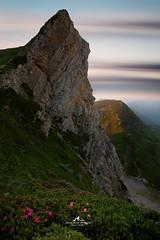 A la croisée des Mondes (Laurent BASTIDE Photographies) Tags: montagne pyrénées landscape paysage pose longue exposure art fine clouds sun light flowers