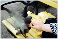 Pigeons and a yellow bench. (Ігор Кириловський) Tags: chernivtsi ukraine slr nikonf5 af zoomnikkor 28105mmf3545d film kodak colorplus 200 promaster spectrum7uv pigeons yellow bench