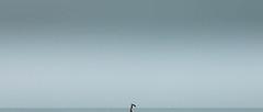 Rain (nshrishikesh) Tags: film cinematic crop chennai marinabeach marina rain man photography minimalism minimal minimalistic