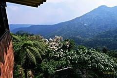 Landscape from Unión Juárez, Chiapas,México.DSC_2890P (gtercero) Tags: 20170417 paisaje uniónjuárez chiapas méxico jchr gtercero