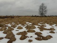 Les Hautes-Fagnes (Rudy Pické) Tags: belgique wallonie jalhay