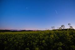 Sunset and night at the canola fields (PiotrHalka) Tags: poland polska nikon d610 1635 nikkor jeleniagóra rzepak canola milkyway sunset night stars astro karkonosze sudety mountians góry