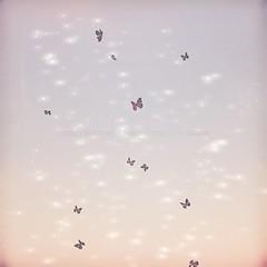 [ keke ] butterflies dancing ([ keke ] by Kean Kelly) Tags: sl secondlife mainstore release keke originalmesh butterflies glitter shimmer twinkle
