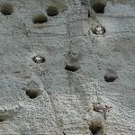 Uferschwalben in den Höhlen thumbnail