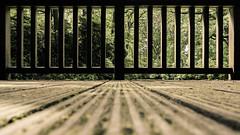 behind bars (JayPiDee) Tags: busch dof geländer hamburg hirschpark linien natur nienstedten park pflanzen tamron28300mmf3563xrdildmacro tamron28300 lines piante plants railing deutschland