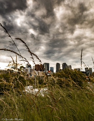 The Old Timer's View (Endless Reflection Photography) Tags: bellevue downtownbellevue bellevuecollection bellevuedowntown bvue blvu bellevueful visitbellevue seattle bellevueskyline lincolnsquareexpansion whotelbellevue twolincolntower westinbellevue lakewashington oldtimer bellevuehistory historicbellevue kemperdevelopment bellevuesquare glyconstruction renton kent canon endlessreflectionphotography cmerchant1 ereflectionphotos cityofbellevue microsoft emeraldcity moody