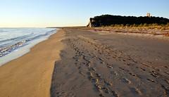 "Questa è ""Maremma"" - This is ""Maremma"", on Explore Jul 07, 2017 - 271 (Jambo Jambo) Tags: mare sea seascape panorama landscape parcoregionaledellamaremma parco park alberese grosseto maremma maremmacountryside maremmatoscana toscana tuscany italia italy nikond5000 jambojambo spiaggia beach collelungo torredicollelungo"