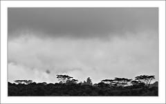 Un temps de chien / San Agustin - Colombie (PtiteArvine) Tags: blackwhite forêt pluie mauvaistemps silhouette noiretblanc