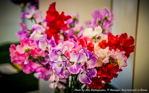 2017 Summer Flower Show 09