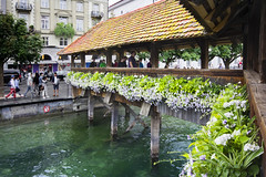 Old bridge in Lucerne (M) (rhianwhit) Tags: switzerland brigde flowers lucerne water
