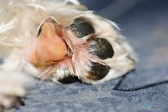 Macro Mondays #BottomsUp (ramonaschmitt) Tags: dog paw schwarz black white weis pink rosa nikon d3300 90mm tamron tier macromondays bottomup