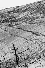 NATURE MORTE (didier.camus) Tags: sable plage mer dune parapente arcachon