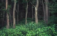 Sometimes Coincidence draws beautiful Moments (Netsrak) Tags: forst forest light licht green grün nature natur eifel europe europa
