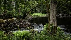 _61A4251.jpg (fotolasse) Tags: stenfors natur nature sweden sverige småland kronoberg å vatten water river bäck sten grönt green canon hdr 16x9 tingsryd