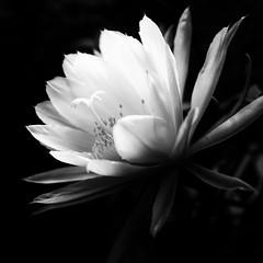 flower (s_inagaki) Tags: flower snap tokyo japan